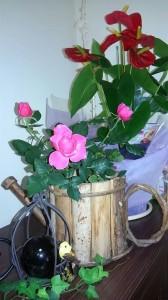 薔薇 アンソリウム